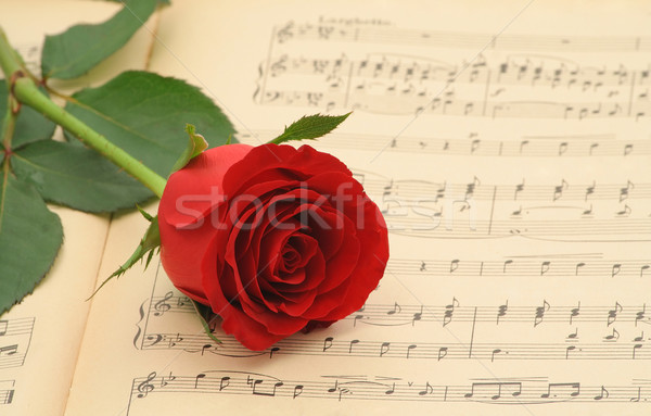 Old sheet music with rose Stock photo © lightkeeper