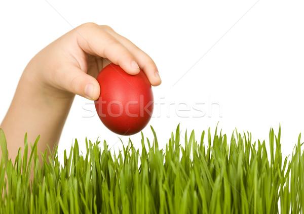 Kind Hand rot Osterei grünen Gras Ostern Stock foto © lightkeeper