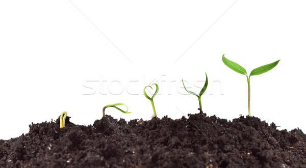 Planta crescimento amor natureza coração Foto stock © lightkeeper