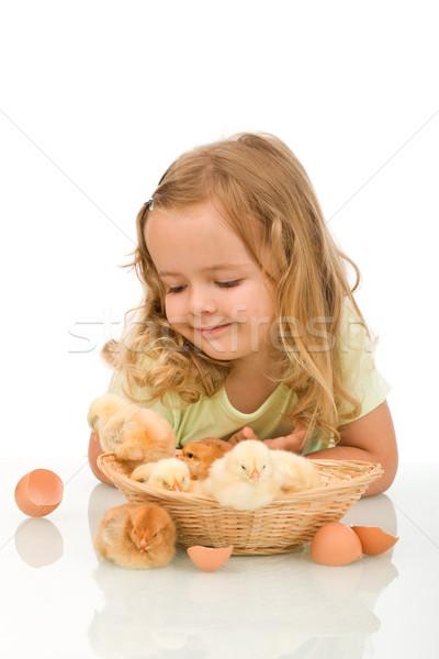 Little girl observing her little chicken babies Stock photo © lightkeeper