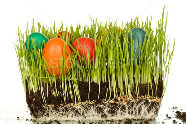 пасхальных яиц свежие пшеницы изолированный отражение Пасху Сток-фото © lightkeeper