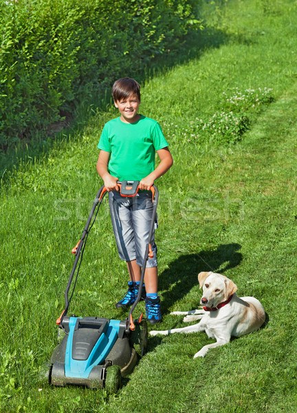 Young boy mowing the lawn accompanied by his labrador doggie Stock photo © lightkeeper