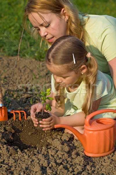 Planting a tomato seedling in the garden Stock photo © lightkeeper