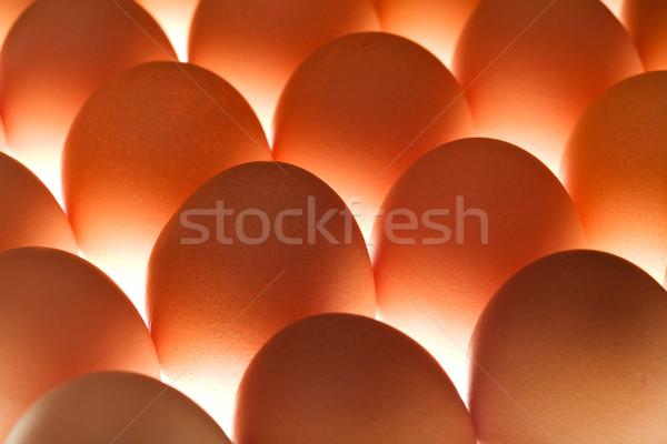 Huevos marrón pie junto Shell hermosa Foto stock © lightkeeper