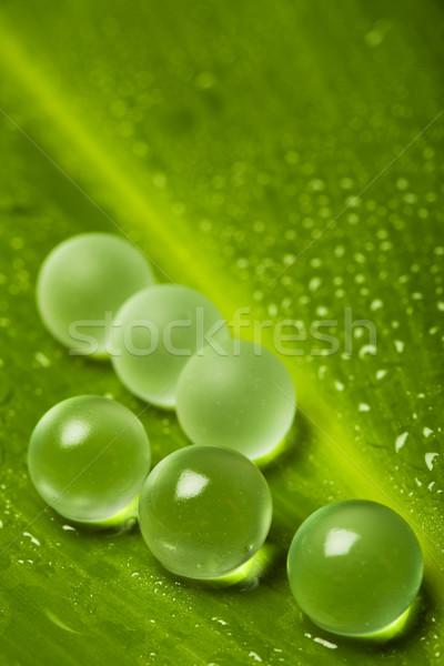 Wet leaf with marbles Stock photo © lightkeeper