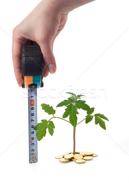 Hand measures plant growth Stock photo © lightkeeper