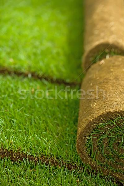 Tőzeg fű tekercsek csetepaté részben sekély Stock fotó © lightkeeper