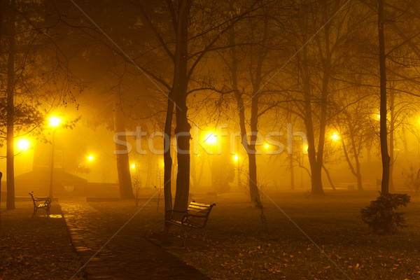 Fog in the park Stock photo © lightkeeper