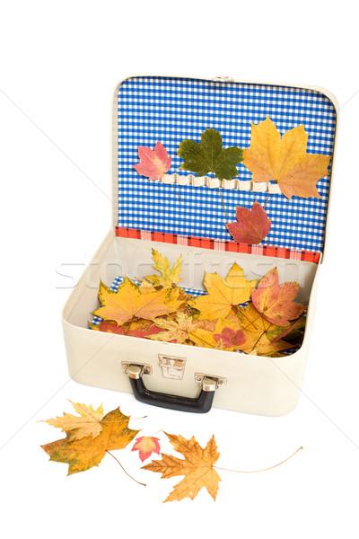 осень праздник Воспоминания красочный сушат листьев Сток-фото © lightkeeper