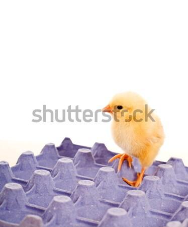 Klein kip eieren eierschaal hoofd natuur Stockfoto © lightkeeper