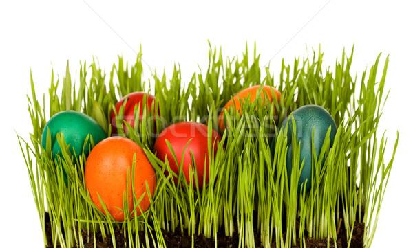 Húsvéti tojások fű megnőtt bent színes izolált Stock fotó © lightkeeper