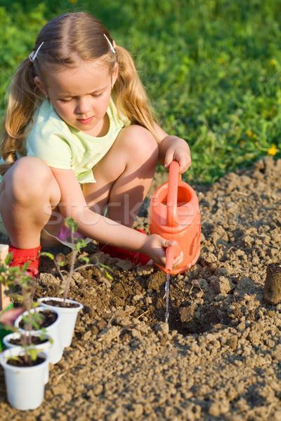 Little girl planting tomato seedlings Stock photo © lightkeeper
