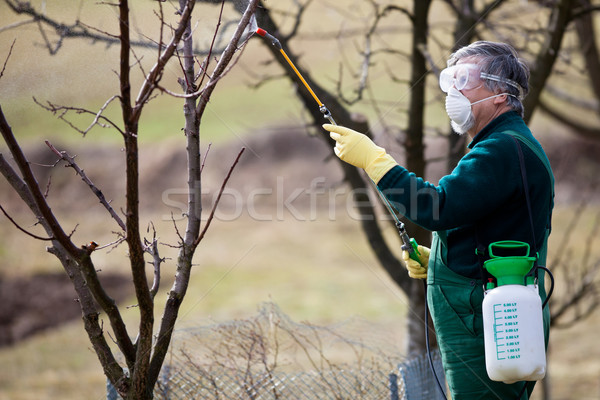 химикалии садовник удобрение фрукты весны Сток-фото © lightpoet