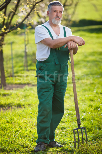portrait of a senior man gardening in his garden Stock photo © lightpoet