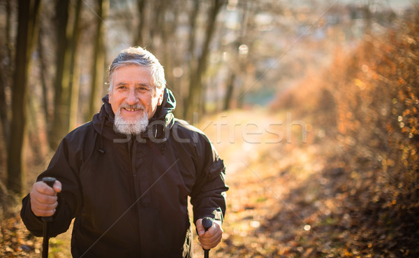 Senior man nordic walking Stock photo © lightpoet
