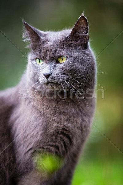 Cute kitty cat outdoors  Stock photo © lightpoet