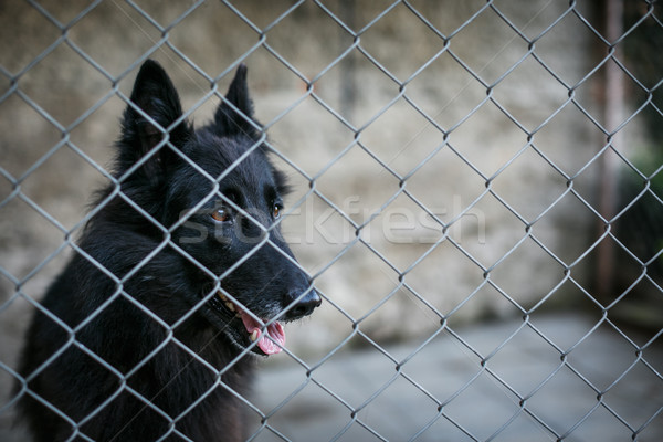 Shelter for homeless dogs - dog behind in a cage waiting  Stock photo © lightpoet