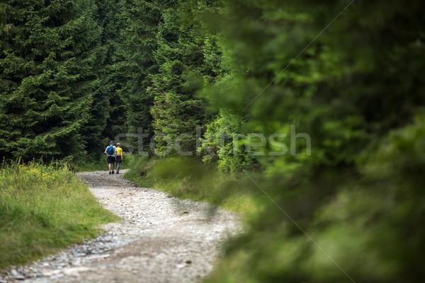 人 ハイキング 高山 森林 パス 空 ストックフォト © lightpoet