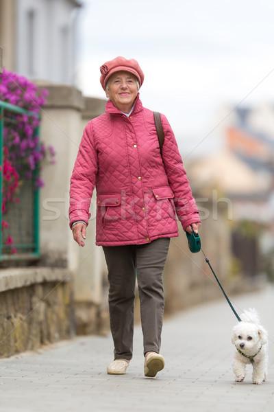 Starszy kobieta spaceru mały psa ulicy miasta Zdjęcia stock © lightpoet