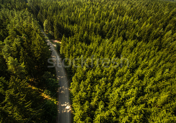 Aerial view of vast forests Stock photo © lightpoet
