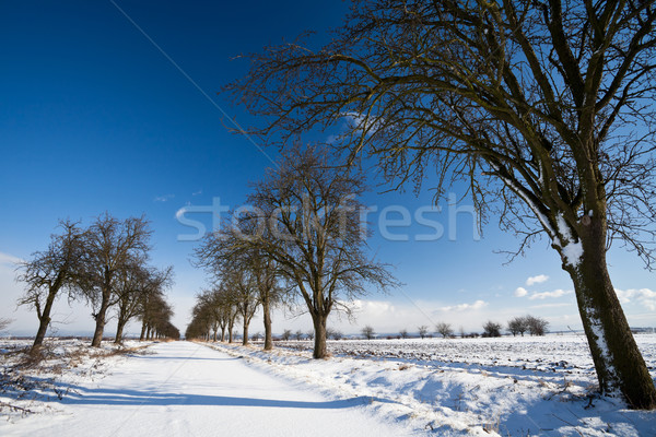 Inverno beco coberto fresco neve ensolarado Foto stock © lightpoet