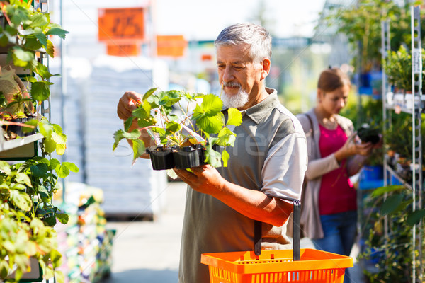 Senior man buying strawberry plants in a gardening centre Stock photo © lightpoet