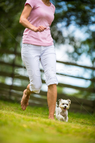 Cute little dog doing agility drill - running slalom, being obed Stock photo © lightpoet