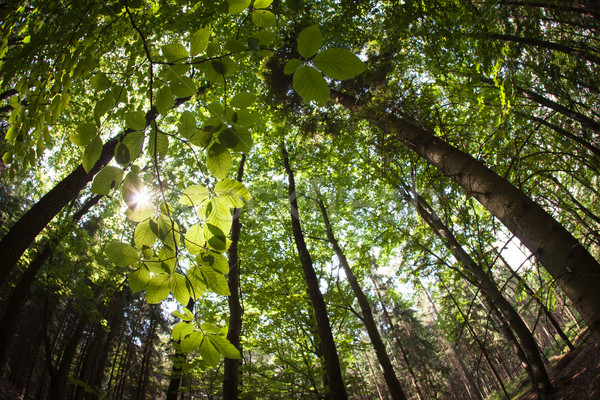 Voorjaar bos vervormd afbeelding shot fisheye Stockfoto © lightpoet