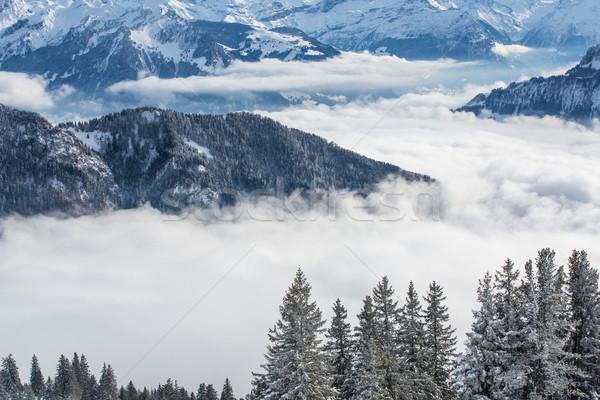 Inverno alpino cenário alto montanhas árvores Foto stock © lightpoet