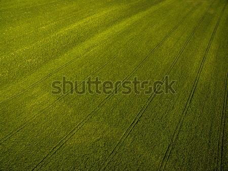 Boven antenne afbeelding weelderig groene Stockfoto © lightpoet