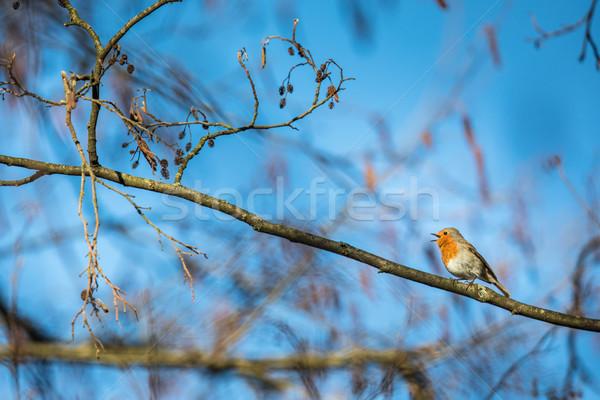 Europeu simplesmente árvore floresta sol natureza Foto stock © lightpoet
