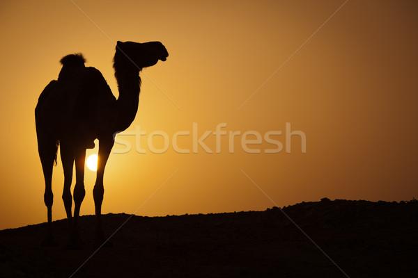 солнце вниз горячей пустыне силуэта Сток-фото © lightpoet
