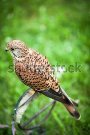 クローズアップ 表示 美しい 鳥 眼 自然 ストックフォト © lightpoet
