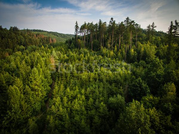 Aerial view of vast forests Stock photo © lightpoet
