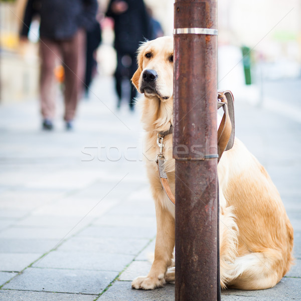 Cute chien attente maître rue de la ville triste Photo stock © lightpoet