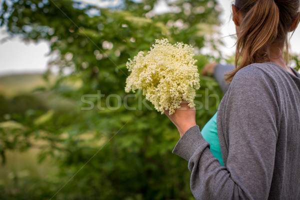 Young woman picking elderflower to make an infusion at home Stock photo © lightpoet