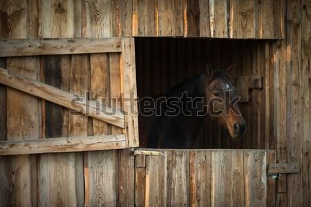 Paard stabiel deur venster vak triest Stockfoto © lightpoet