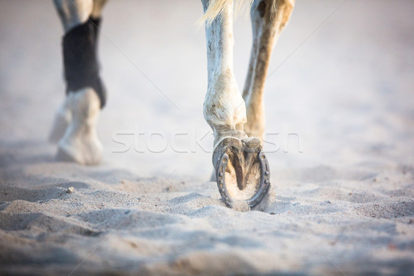 Stock photo: Legs running consecutively horse