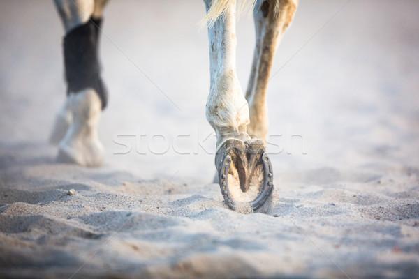 Benen lopen paard gezondheid lopen schoen Stockfoto © lightpoet