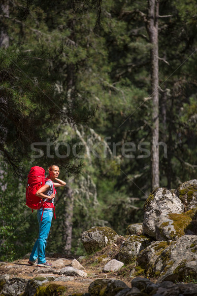 Pretty, young female hiker walking through a splendid old pine Stock photo © lightpoet
