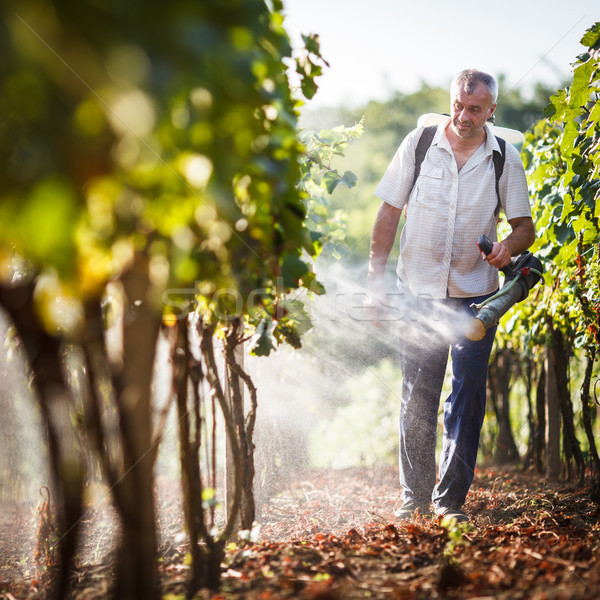 Sétál szőlőskert vegyszerek szőlő étel fény Stock fotó © lightpoet