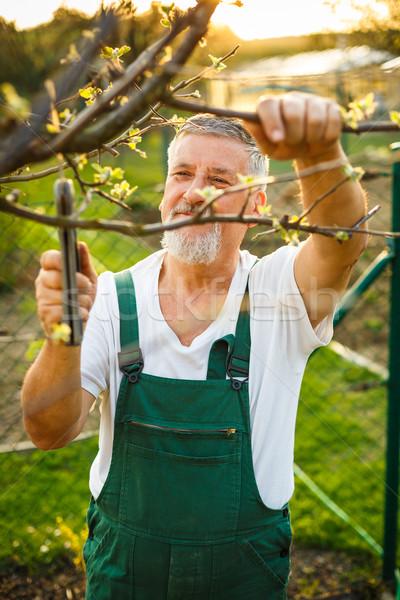 Portret knap senior man tuinieren tuin Stockfoto © lightpoet
