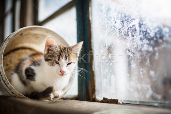 Cute Китти сидят окна глазах зеленый Сток-фото © lightpoet