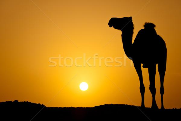 Nap lefelé forró sivatag sziluett vad Stock fotó © lightpoet