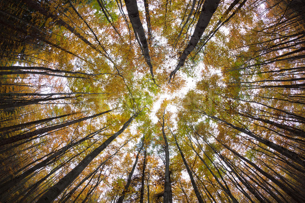 ősz erdő eltorzult kép lövés halszem Stock fotó © lightpoet