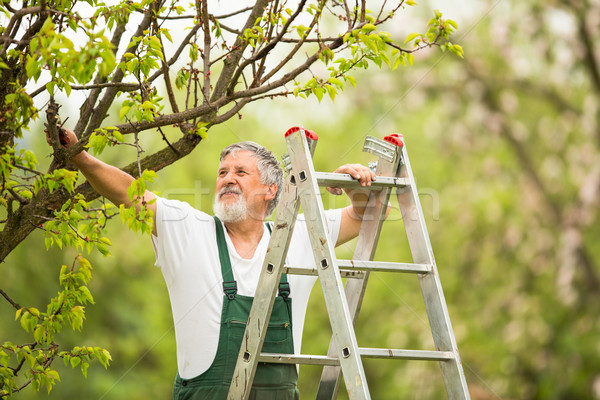 Senior man tuinieren tuin kleur handen Stockfoto © lightpoet