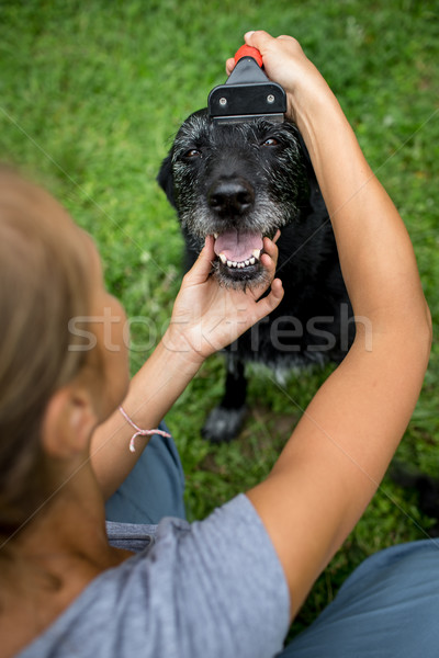Younf woman combing out the fur of a black dog in her garden