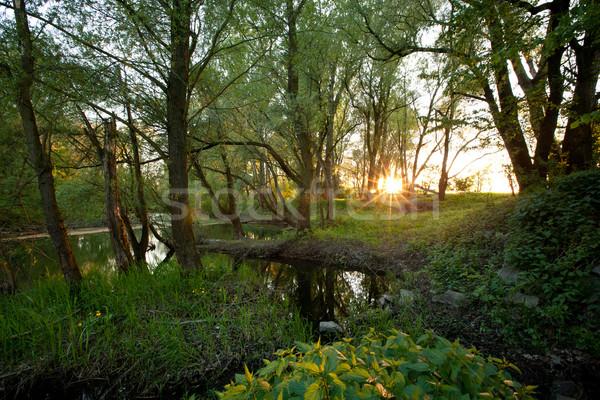 Beautiful riparian forest scenery on a lovely summer evening Stock photo © lightpoet