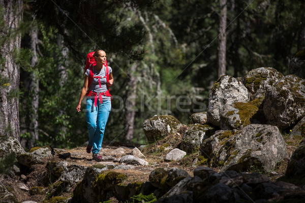 Pretty, young female hiker walking through a splendid old pine forest Stock photo © lightpoet