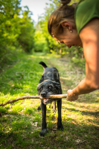 Walking the dog - throwing the stick to fetch to this eager companion Stock photo © lightpoet